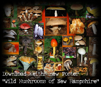 Mushrooms of Tuftonboro, New Hampshire